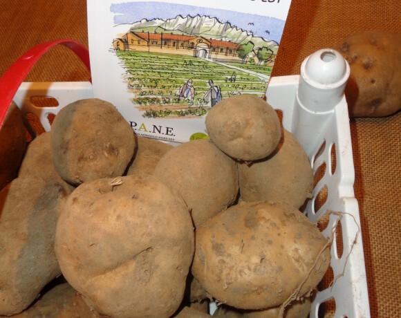 La Patata Biancona di Oreno è  in vendita!
